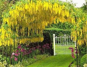 Пергола с желтыми цветами и растениями