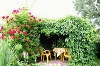 Растения для беседки, как сделать вашу беседку красивой!